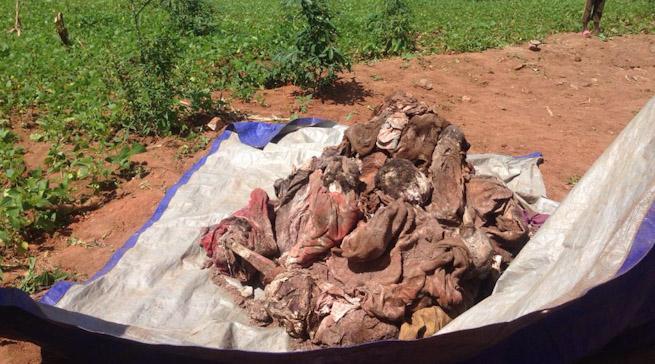 Huye: I Tumba habonetse imibiri 47 y'abishwe muri Jenoside yakorewe Abatutsi