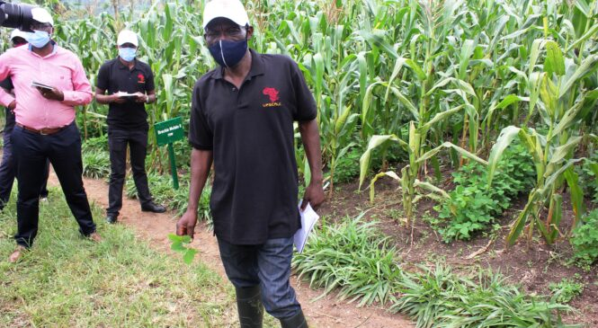 UPSCALE Project boosts crop and livestock farmers as well as conserving environment