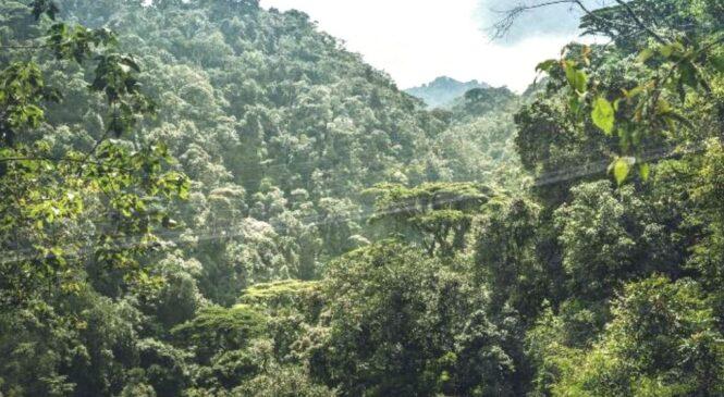 Kubungabunga Amashyamba inkingi y'ubuzima bwa muntu